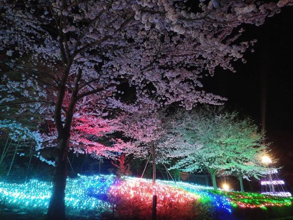 夜桜ファンタジア イメージ1
