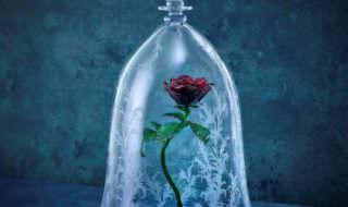 ガラスドーム「la rose(ラ・ローズ)」