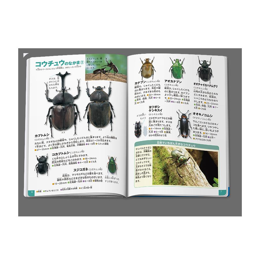 昆虫/森や林のむし中身