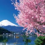 桜と富士(山梨)