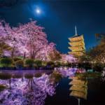 月夜に咲く(京都)