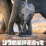 「ディズニーネイチャー/ゾウの足跡を追って」ジャケット写真