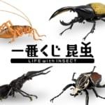 BANDAI SPIRITS「一番くじ 昆虫 LIFE with INSECT」