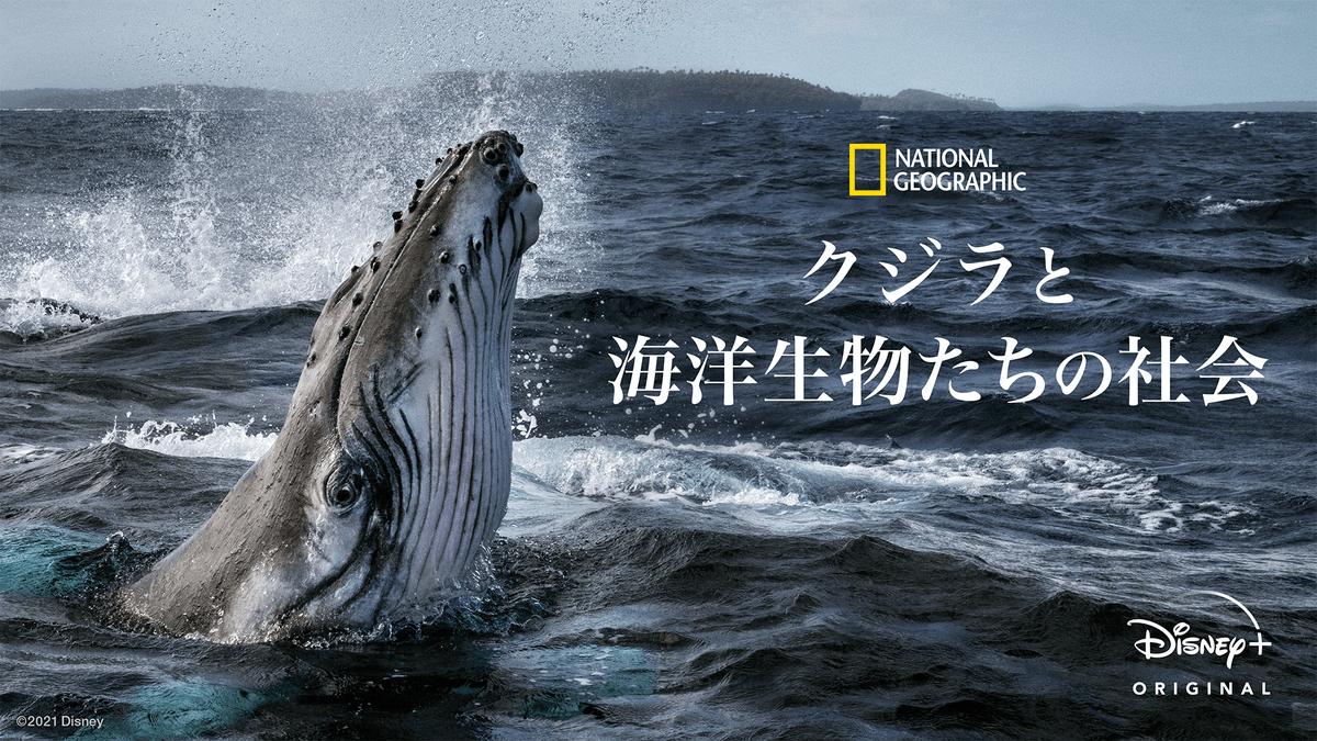 『クジラと海洋生物たちの社会』