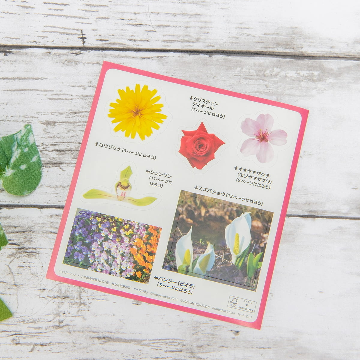 ミニ図鑑「花/春から初夏の花 クイズつき」クイズ