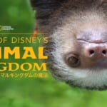 『Magic of Disney's Animal Kingdom ディズニー・アニマルキングダムの魔法』