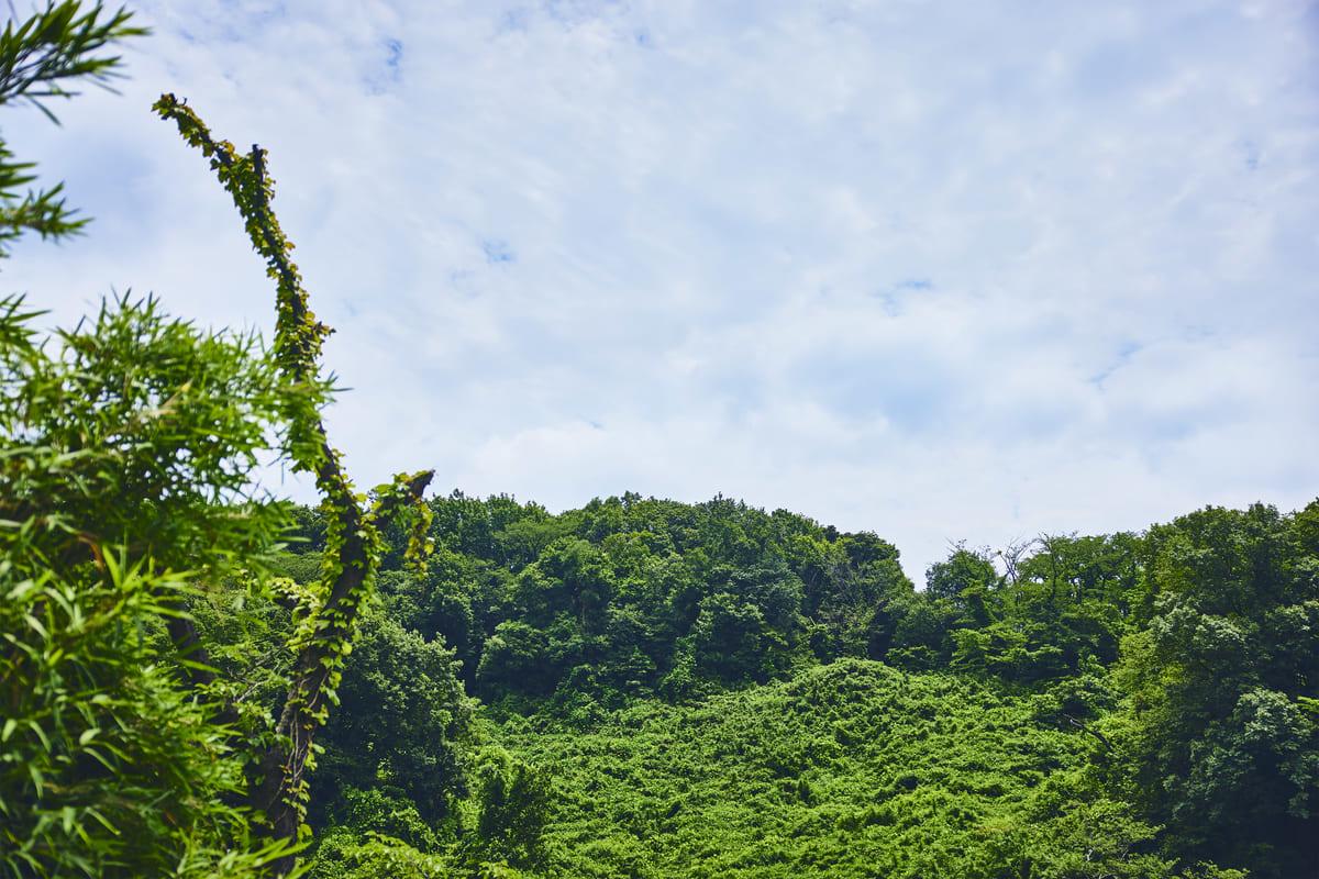 20年近く手つかずの森が、冒険の舞台に
